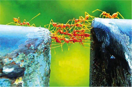 team-work-ants
